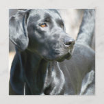 Alert Black Labrador Rertriever Dog Invitations