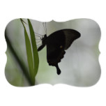 Black Swallowtail Card