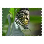 Butterfly Beauty Card