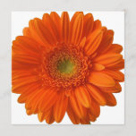 Orange Daisy Invitations