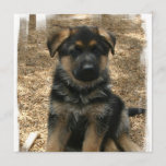 Shepherd Puppy Invitations