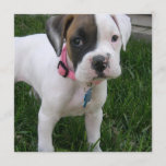 White Boxer Puppy Dog Invitation