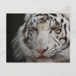 White Tiger Invitation